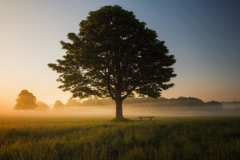 Pleine conscience, mindfulness : être ici et maintenant