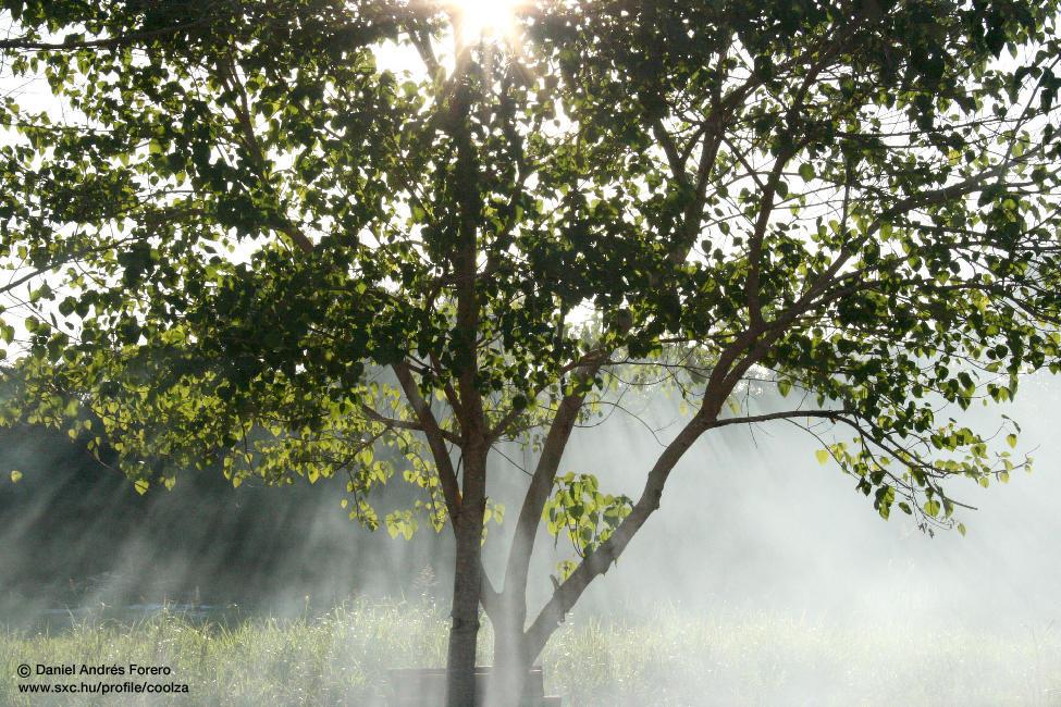 Les meilleurs conseils pour profitez des bienfaits de la luminothérapie